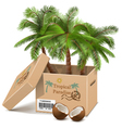Palm Tree in Box vector image
