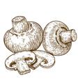 engraving champignons vector image