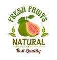 Guava Fresh natural tropical exotic fruit emblem vector image vector image