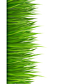 Nature background with green grass vector image vector image