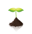 growing sprout vector image