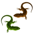 Green and brown lizards on a white background vector image