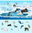 colorful arctic wildlife concept vector image