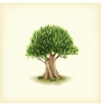 Color of the olive tree vector image
