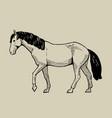 walking horse hand drawn vector image