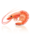 object shrimp vector image vector image