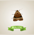 realistic moth element of vector image