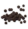Black pepper closeup vector image