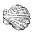 hand drawing seashell-2 vector image