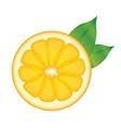 orange sliced fruit vector image