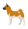Akita breed dog vector image