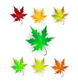 Autumn Maple Leaves Set vector image
