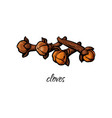 flat sketch dry cloves isolated vector image