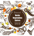 background - spices herbs vegetables vector image