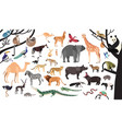 collection of exotic animals and birds living in vector image