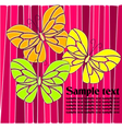 Butterflies in pink green yellow and orange vector image