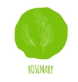Rosemary white on green print vector image