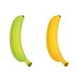 green and ripe banana vector image