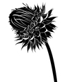 milk thistle flower vector image