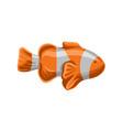 clown fish orange and white striped fish vector image