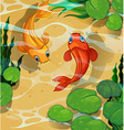 Scene with kois swimming in the pool vector image