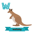 Wallaby W letter Cute children animal alphabet in vector image