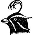 Head of a Bird vector image vector image