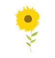 A sunflowers vector image vector image