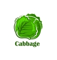 Cabbage vegetable with crunchy green leaves vector image