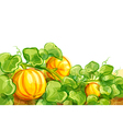 growing pumpkins - EPS10 vector image vector image