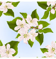seamless texture twig of apple tree with flowers vector image