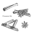 Ink hand drawn cinnamon set vector image