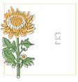 chrysanthemum minimal card vector image