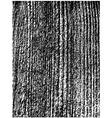 rough wooden texture vector image