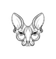 sphynx cat face vector image