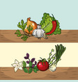 set herbs and spices plants and organ food vector image
