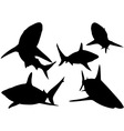 Black Tip Shark Silhouettes vector image