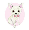 girl chihuahua print cute fashionable dog sketch vector image