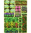 Kitchen garden vector image