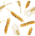 wheat and rye ears seamless pattern vector image