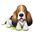 Basset Hound puppy vector image vector image