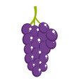 berry grape icon cartoon style vector image
