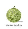 realistic melon ball isolated on white vector image