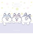 Three cute puppy color vector image vector image