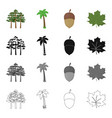 a group of trees in the forest a palm tree an vector image