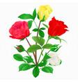 bouquet of rosebuds vector image