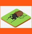 beetle eps vector image