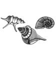 hand drawn sea shells vector image