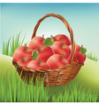 Basket with apples on the lawn harvest apples vector image