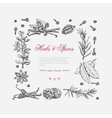 frame of spices and herbs vector image